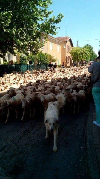 LA FERME DES PALETS élevage d'agneaux Saint-Julien le Montagnier, Haut Var Provence - Producteur - Haut Var Verdon - Image 2