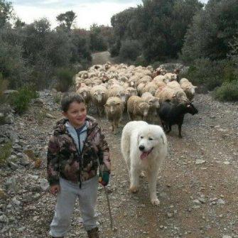 LA FERME DES PALETS élevage d'agneaux Saint-Julien le Montagnier, Haut Var Provence - Producteur - Haut Var Verdon - Image 3