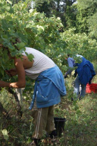 Domaine Valcolombe Côteaux varois Villecroze Haut Var - Domaine viticole - Producteur - Côteaux Varois Villecroze - Image 9
