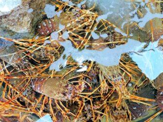 Aux Délices de la Marée Poissonnerie coquillages Le Lavandou - Métiers de bouche - Poissonnerie - Le Lavandou Bormes les Mimosas - Image 3