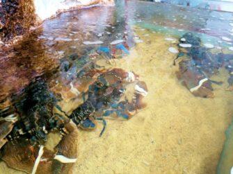 Aux Délices de la Marée Poissonnerie coquillages Le Lavandou - Métiers de bouche - Poissonnerie - Le Lavandou Bormes les Mimosas - Image 12